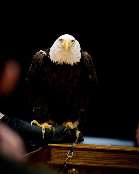 martin eagle-25.jpg