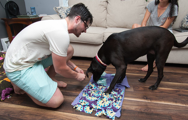 08/01/18 Wesley Bunnell | Staff Robert Genuario hides treats for Buddy, a blind 8 year old Labrador retriever he adopted with Samela Santana. Buddy required surgery and lost both eyes due to glaucoma while up for adoption at the Connecticut Humane Society's Newington location.