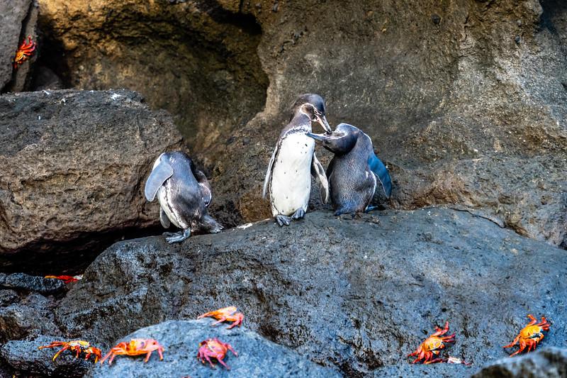 Galapagos-3714.jpg