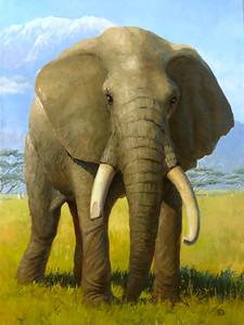 """Elephant"" (oil) by Krebs Dmitry"