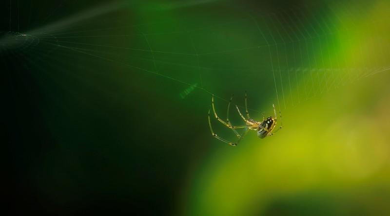 Spiders-Arachnids-165.jpg