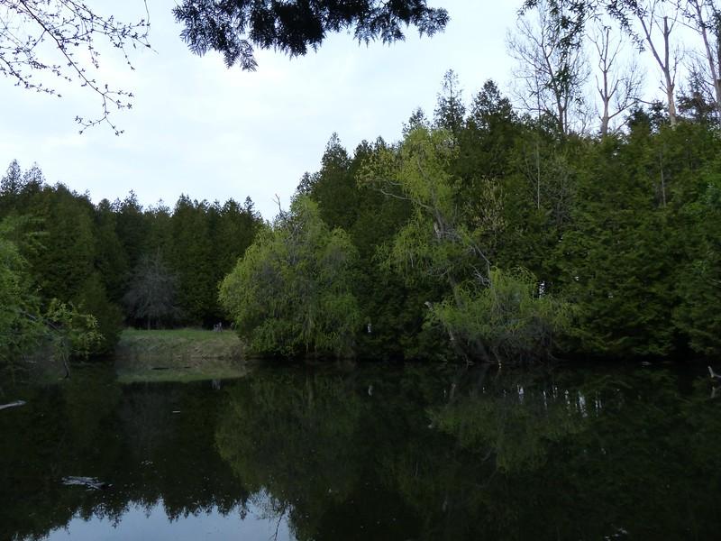 Stream-side pond