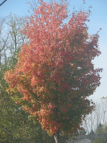 Fall pics 2008 034.jpg