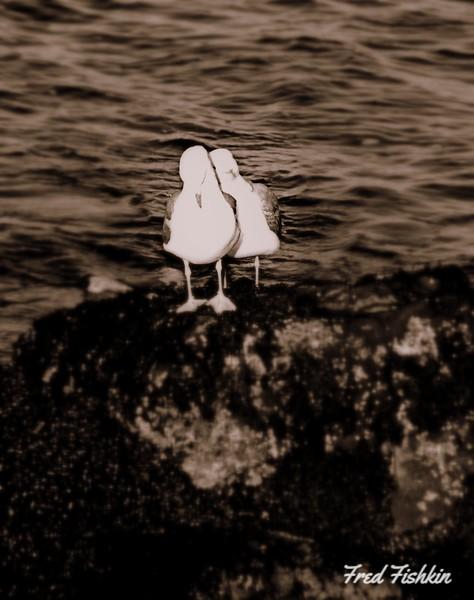 gulls bw 2.jpg
