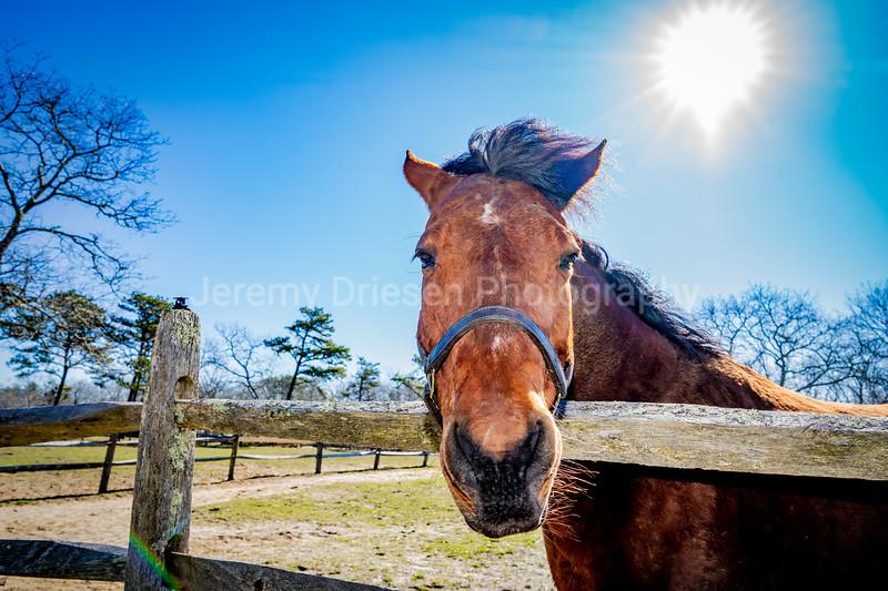 210329_Brian_Dowd_stables-65.jpg