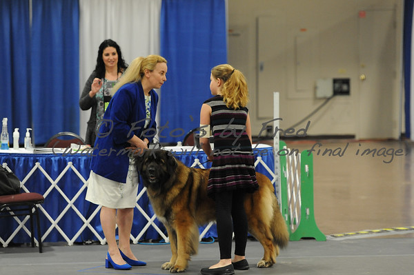 Friday LCA Females - Best in Show - Brace - Breeders line
