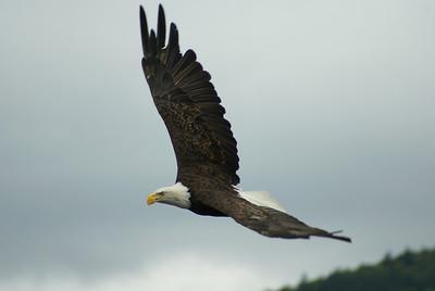 North American Birds