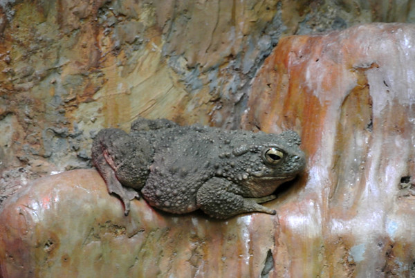 Birmingham Zoo Amphibians