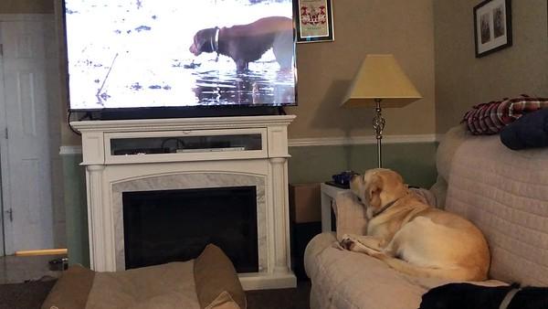 Brooks watching TV