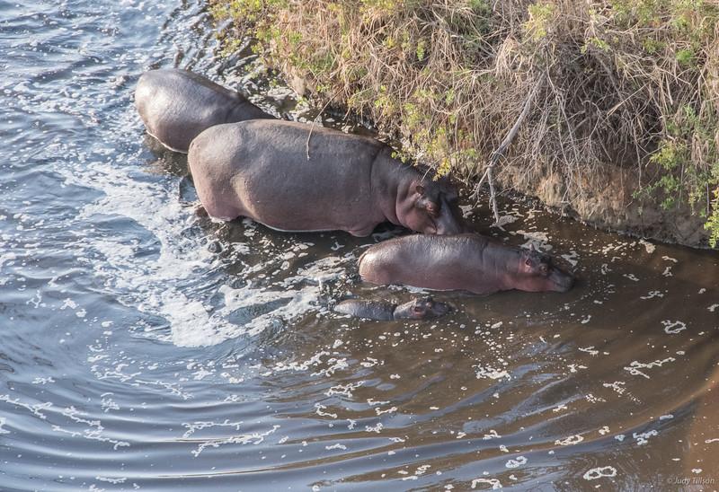 Hot Air Balloon Ride hippos babes water-6374.jpg