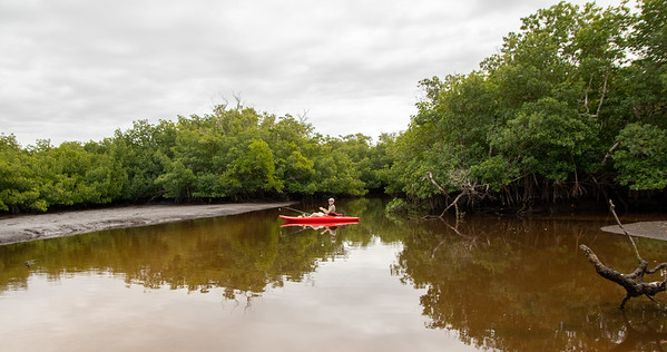 Collier-Seminole SP Kayaking - Jan 17, 2021
