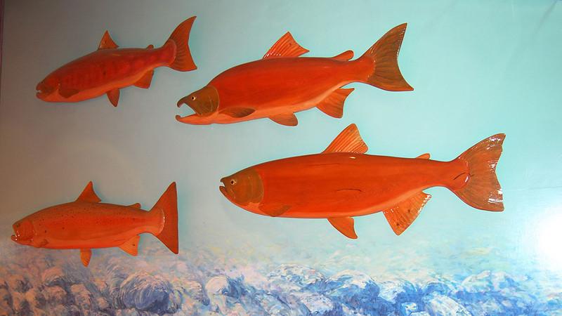 Bonneville Dam Fish Ladders