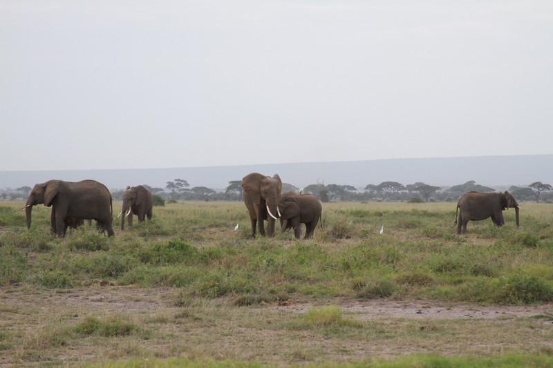 Kenya 2019 #2 408.JPG