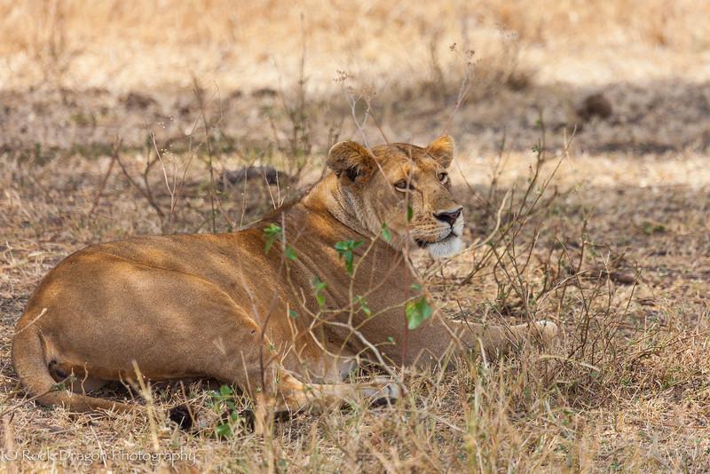 South_Serengeti-39.jpg