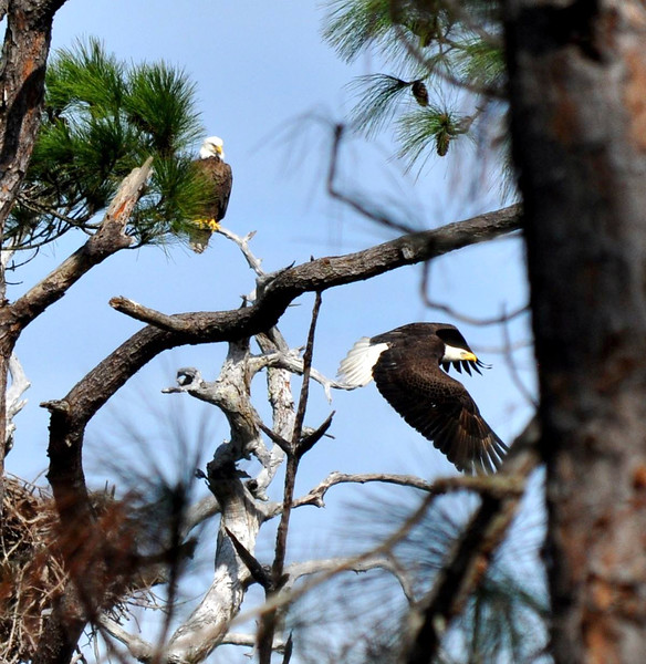 11_3_19 Eagles Nest Honeymoon Island.jpg