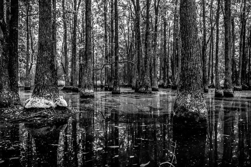 Serene Swamp