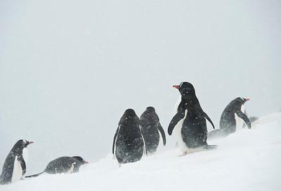 Antarctica 南极
