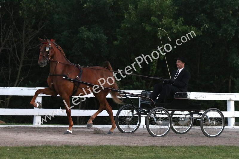 Class 15: American Saddlebred Fine Harness Stake