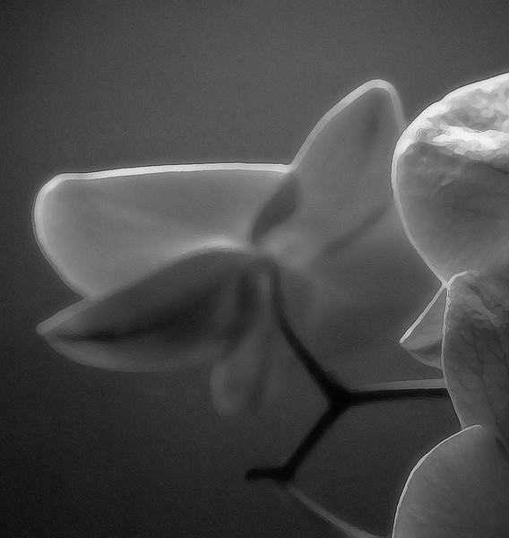 orchid study 2 4-6-2008.jpg