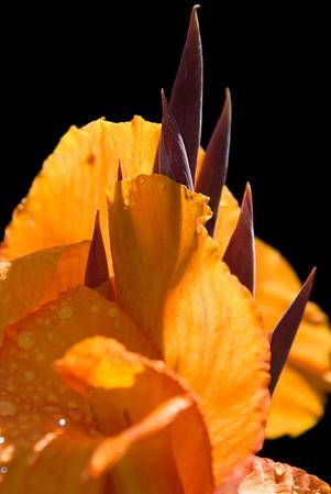 Ecuador 2011 Flowers & Cactus