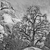 Joshua Tree NP CA 2008