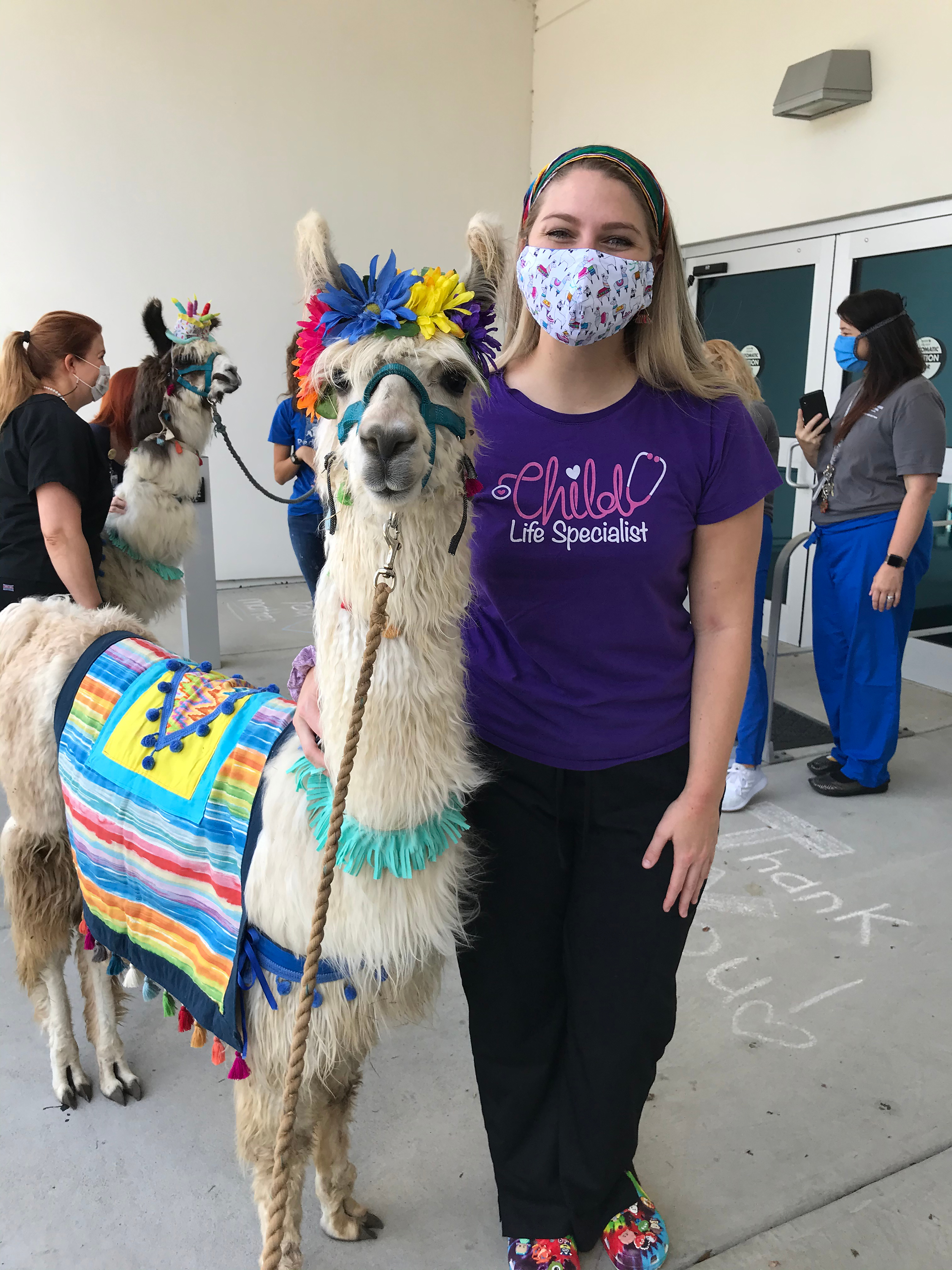 Mary Mason Beale brings in a llama for a coworker's birthday.