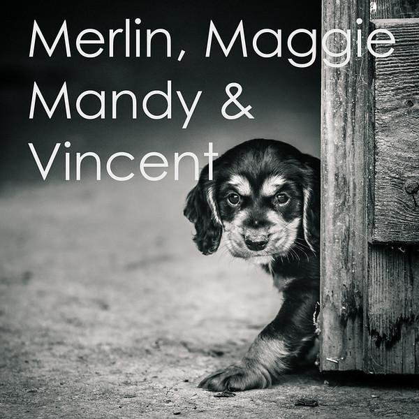 Merlin-Icons.jpg