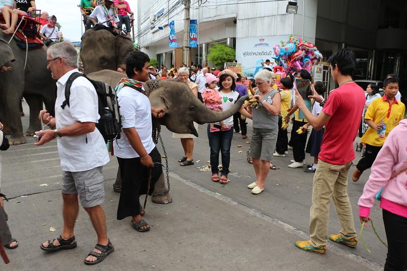2014-11-14 Surin Elephant Welcome Feast 228.JPG