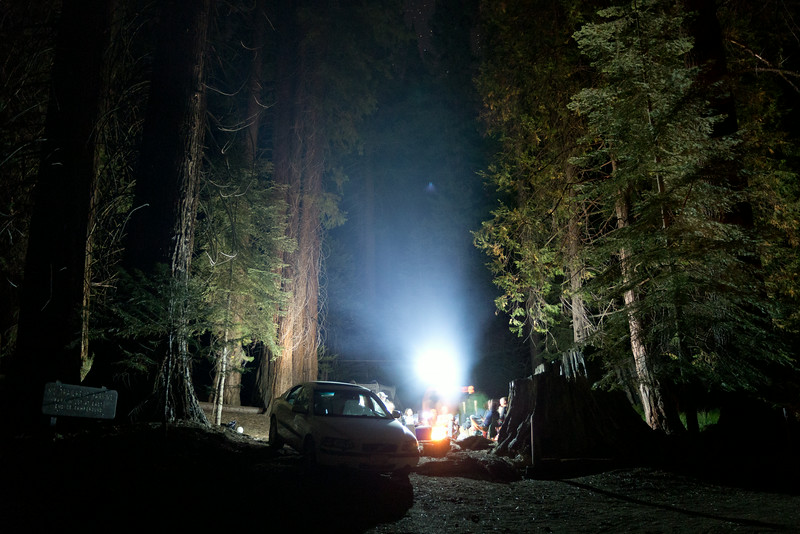 Sequoia_0804.jpg