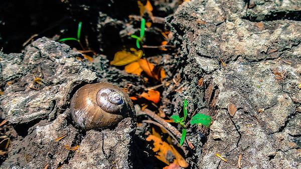 Palo Verde y Lomas de Barbudal 2014