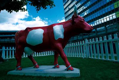 CowParade Manchester