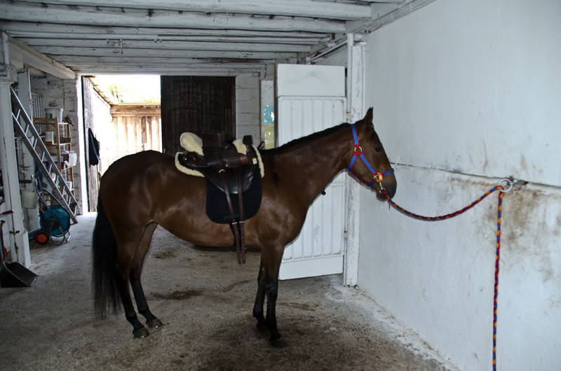 Saddling up for first lesson