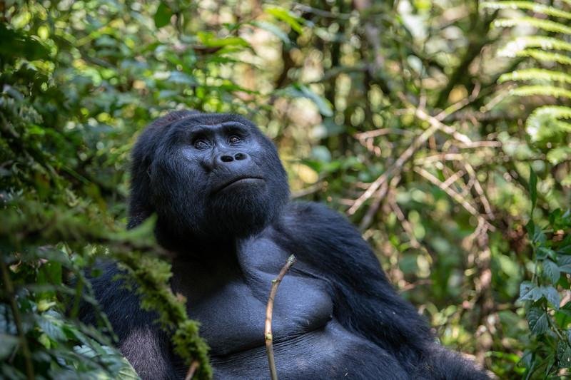 Uganda_T_Gor-430.jpg