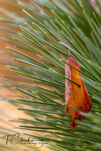 Pierced Leaf-1505697997586.jpg