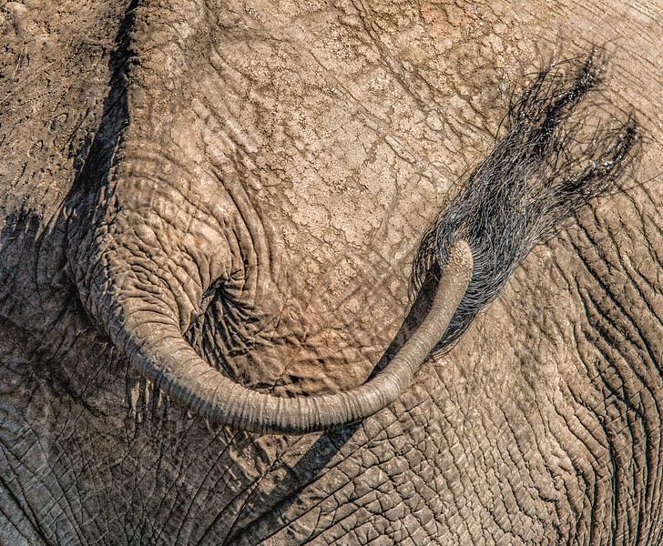 Z_3_2006_A_Elephants Tail 82.jpg