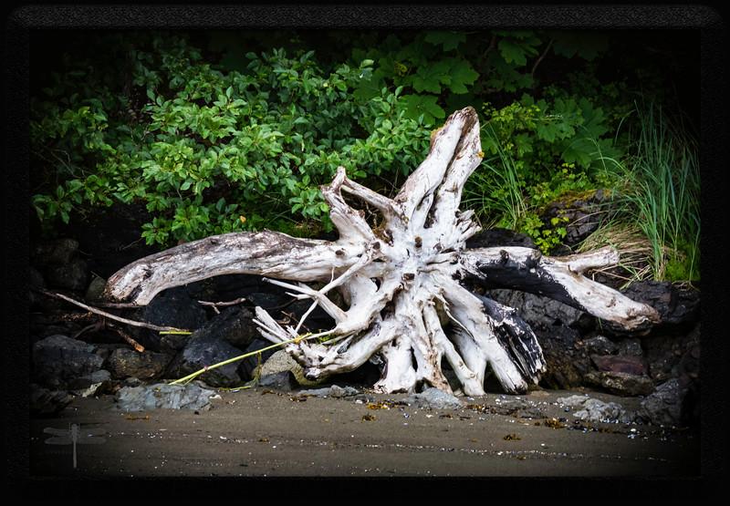 Driftwood_Juneau_664A7288.jpg