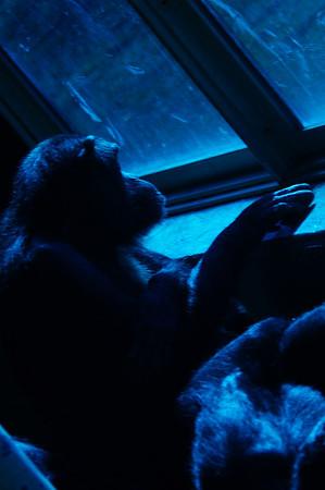 20110219 Detroit Zoo