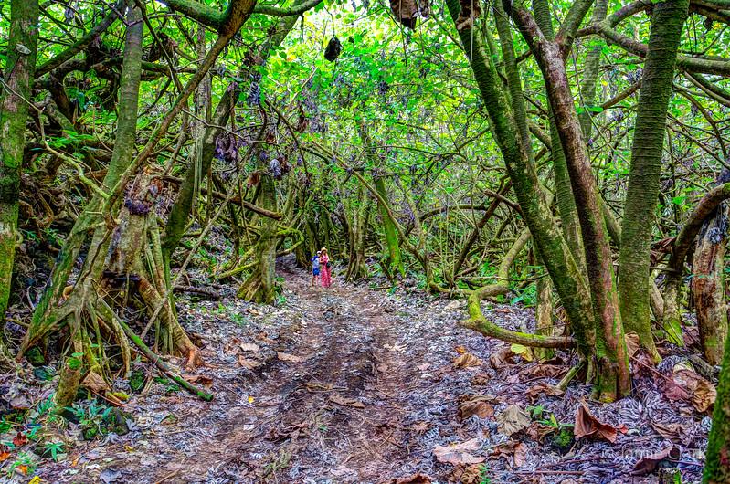 Jungle near Pahoa, Hawaii