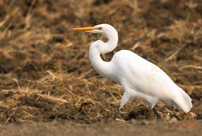2020 Birds of the Wetland