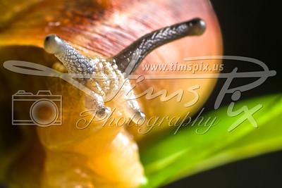 Portraits of a Garden Snail
