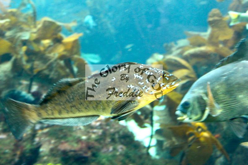 Aquarium 20148.jpg