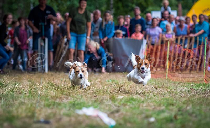 Houthakkers feest / Dog run
