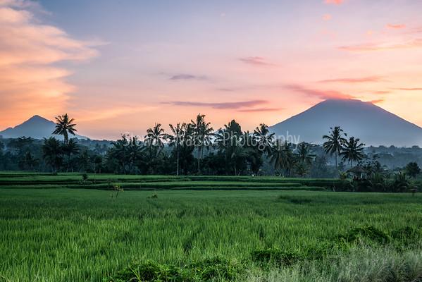 Bali, Matamanoa, Rorotonga