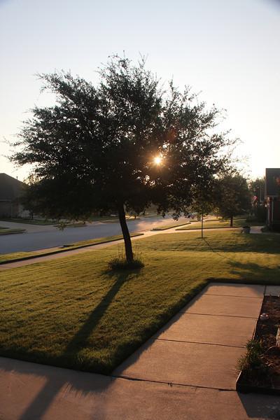 7.12.12 Tree with Sun