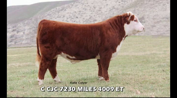 Colyer 35th Annual Production Sale