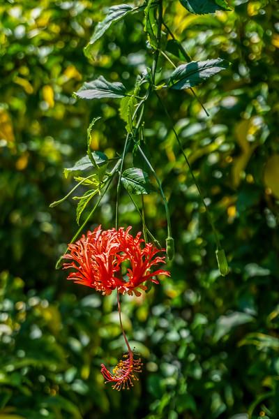 Mead-Gardens-37.jpg