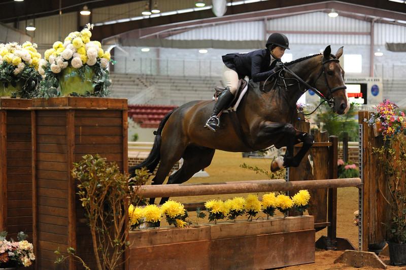 Horse show (2).jpg