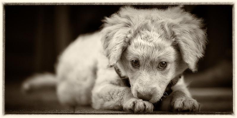 puppymar1317 10.jpg