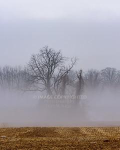 02/11/18 Winter Fog