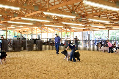 Junior Swine Showmanship Sunday